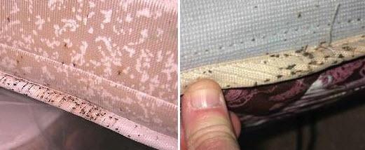 клопы от чего заводятся на обшивке мебели