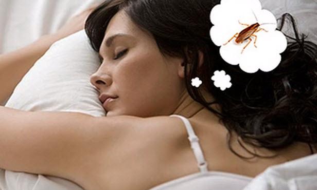 сладкий сон клопы снятся к чему или тараканы