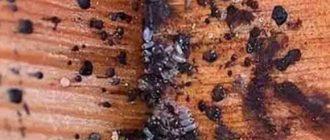 насекомые в углу дивана